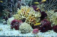 科技资讯看点:新研究揭示了采矿对珊瑚礁的影响